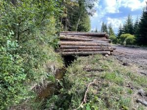 Ničí těžba dřeva Schwarzenberský kanál? Národní park Šumava to odmítá