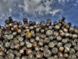 Policisté na Táborsku řeší další krádež dřeva, škody jsou v desítkách tisíc korun