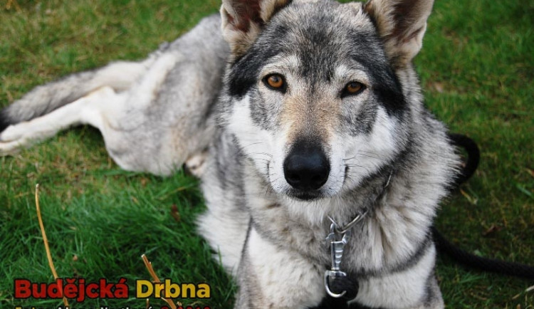 Mezinárodní výstava psů v Č. Budějovicích 2012