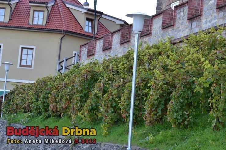 Slavnosti vína v Hluboké nad Vltavou