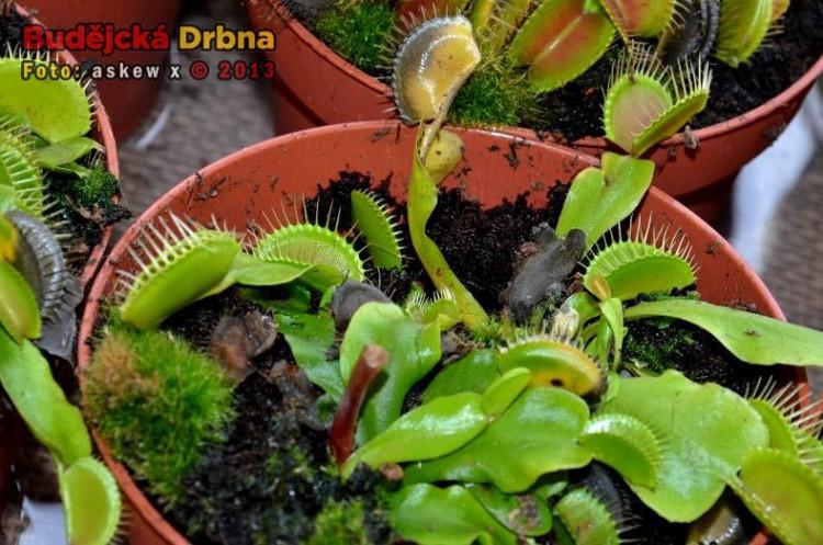 Prodejní výstava orchidejí v DK Metropol