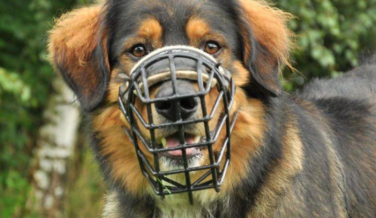 Aktuální nabídka zvířat v útulku Animal Rescue