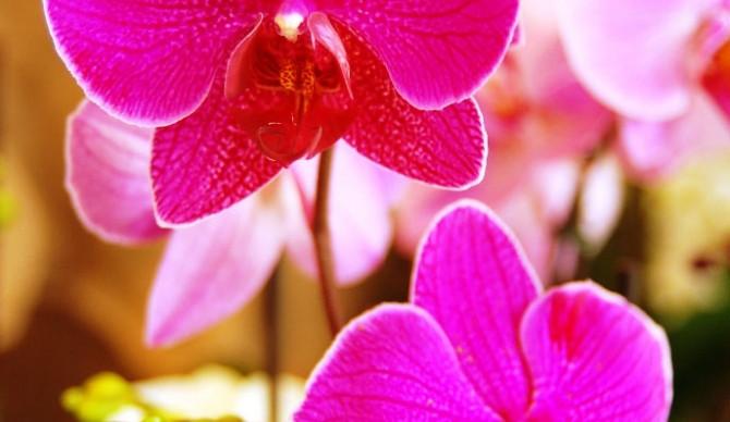 15. ročník prodejní výstavy orchidejí