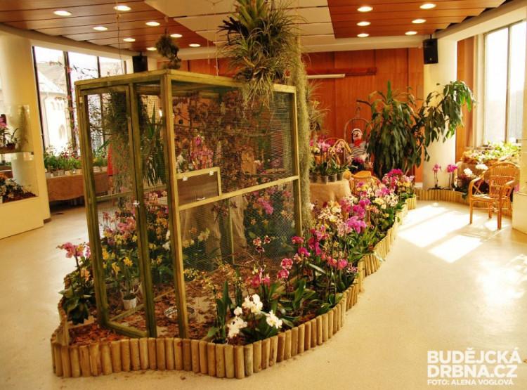 Vstupem do této místnosti, kde zpívají ptáci, je tam teplo a kvetou orchideje, se ocitnete v jiném světě