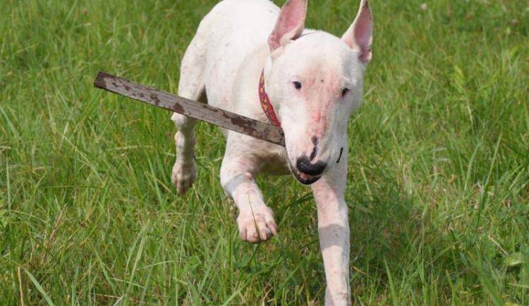 Srpnová nabídka opuštěných zvířat v Animal Rescue