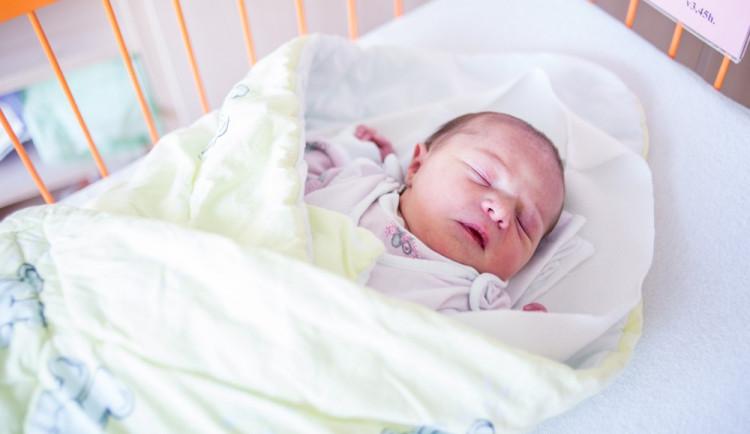 Novorozenci Listopad
