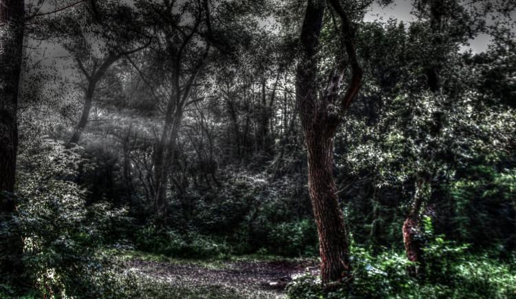 Vyšetřování v rumunském strašidelném lese Hoia Baciu přineslo výsledky