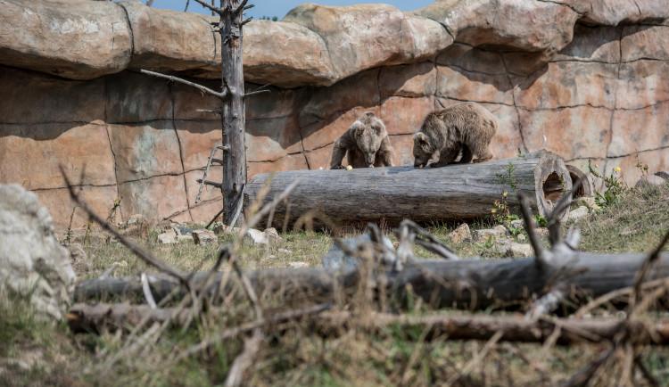 Hlubocká zoo pokřtila mládě medvěda plavého. Dostalo jméno Nochunsafed
