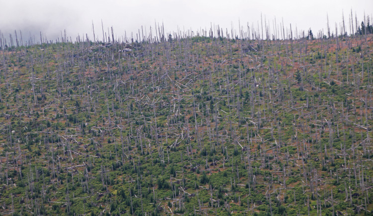 Snímky ze Šumavy